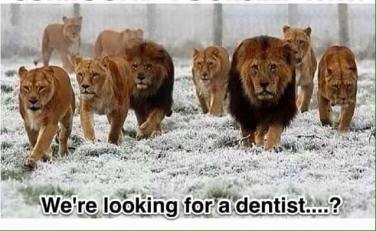 We are looking for a dentist