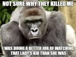 Wk 24 Gorilla