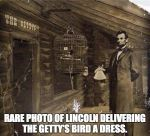 Wk 36 Lincoln Getty's Bird A Dress