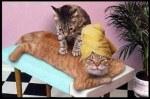 wk-51-cat_massage