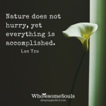 wk-9-nature-does-not-hurry-yet-everything-is-accomplished1